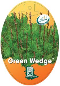 Baloskian Green Wedge