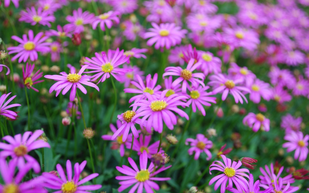 Give Native Plants A Boost!