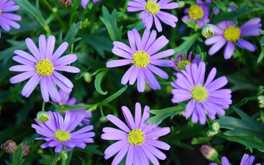 Five Small Flowering Plants For Spring Borders