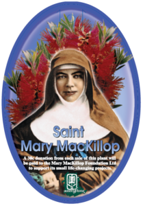Callistemon Saint Mary Mackillop