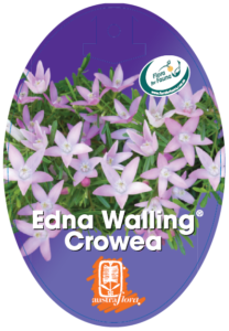 Crowea Edna Walling