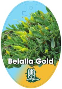 Eremophila Belalla Gold