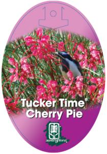 Grevillea Cherry Pie