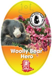 Grevillea Woolly Bear Hero