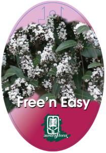 Hardenbergia Free N Easy
