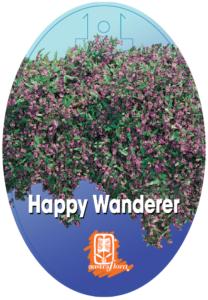 Hardenbergia Happy Wanderer
