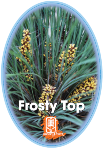 Loandra Frosty Top