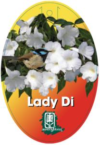 Pandorea Lady Di