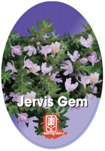 Westringia Jervis Gem