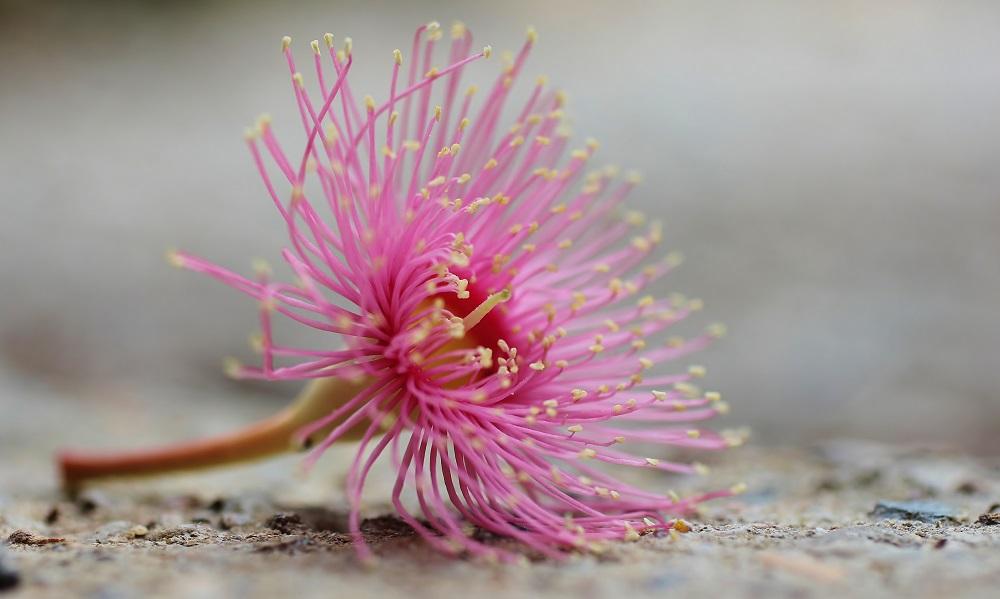 Native Birth Flowers