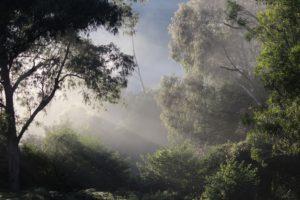 """""""Sun Through The Trees"""" by Sooz Manderson"""