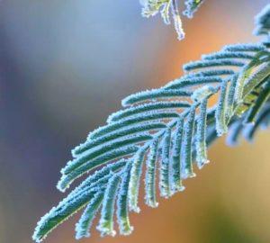 """""""Frosted Leaf"""" by Stuart Baker"""