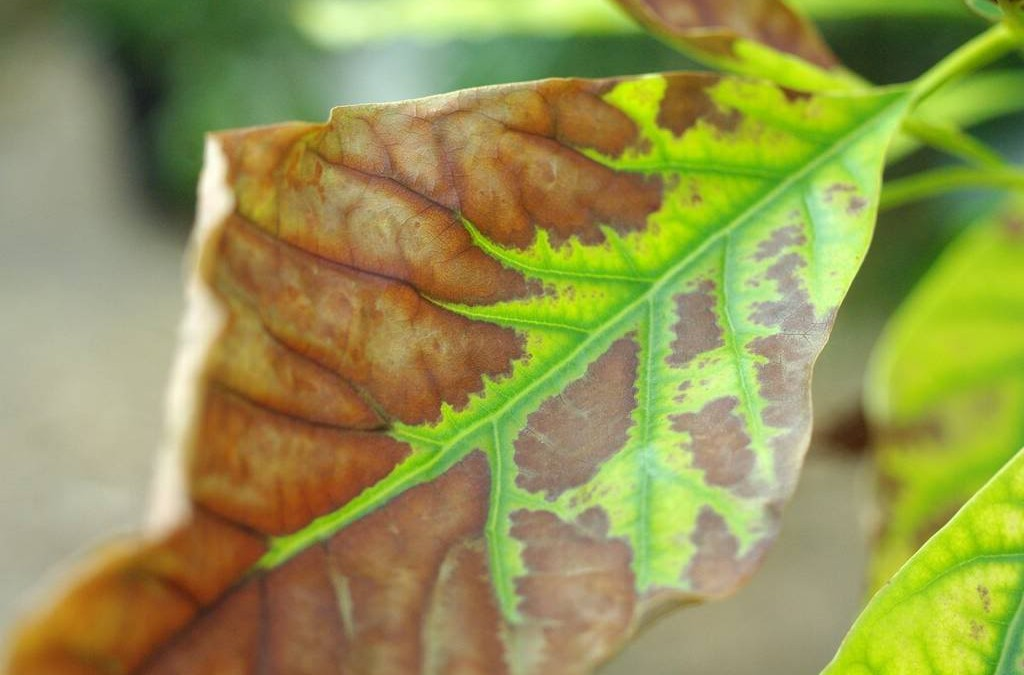 Preventing And Treating Heat-Damage In The Garden