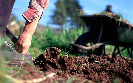 Organic Gardening Begins With The Soil