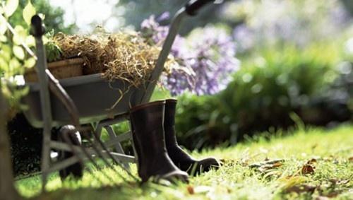 10 Gardening Jobs For Winter
