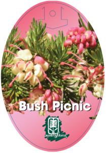 Grevillea Bush Picnic