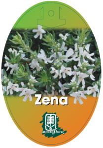 Westingia Zena