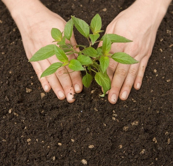 Caring For Your Plants Organically