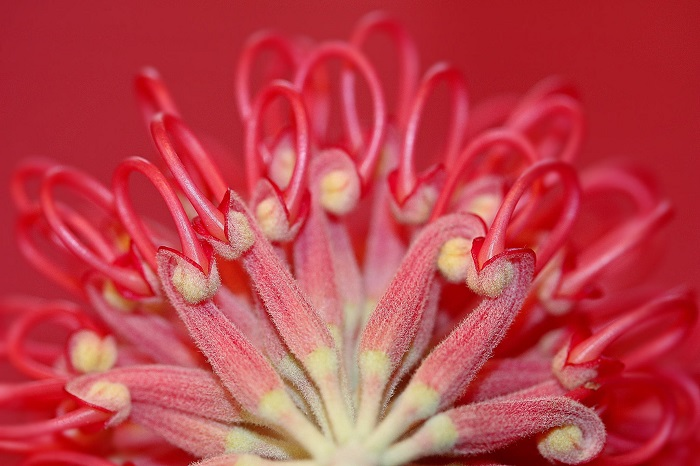 6 Tips For Photographing Flowers