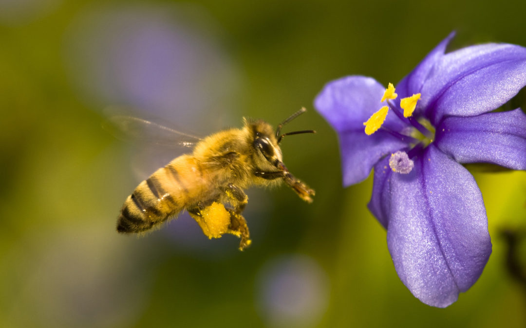 Pollen Magic – Attracting Pollinators To Your Garden