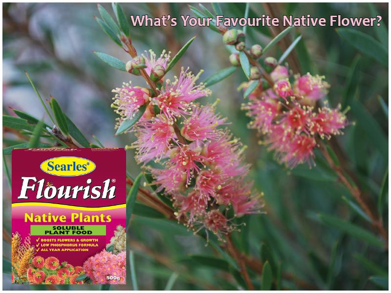 Five Flourishing Flowers