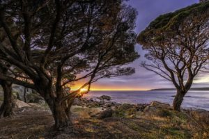 """Shelly Cove near Bunker Bay, Cape Naturaliste"" by David Ashley"
