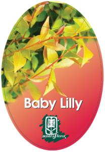Acmena Baby Lilly