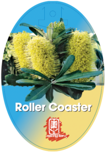 Banksia Roller Coaster