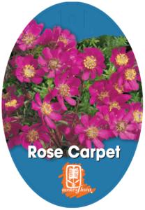 Bauera Rose Carpet