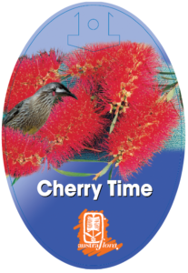 Callistemon Cherry Time