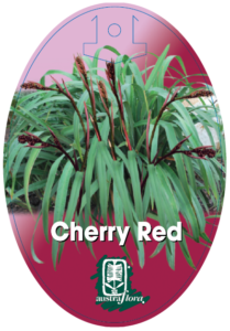 Dianella Cherry Red