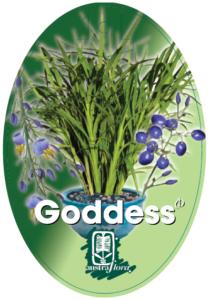 Dianella Goddess