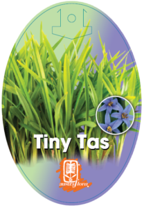 Dianella Tiny Tas