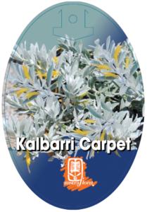 Eremophila Kalbarri Carpet