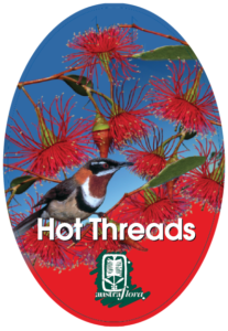 Eucalyptus Hot Threads