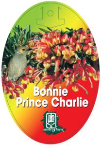 Grevillea Bonnie Prince Charlie