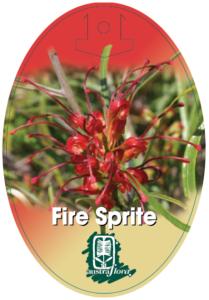 Grevillea Fire Sprite