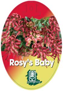 Grevillea Rosys Baby