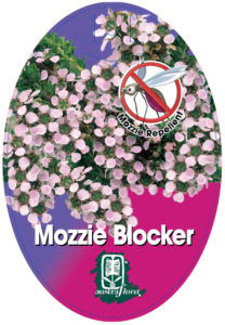 Leptospermum Mozzie Blocker