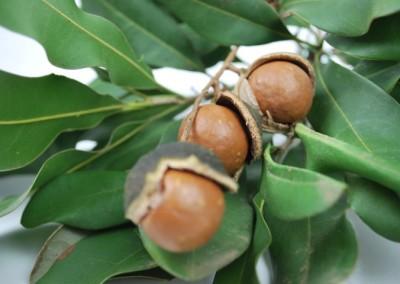 Macadamia Tucker Time Lotsa Nuts