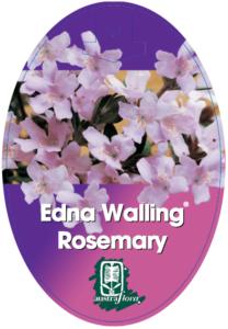 Westringia EW Rosemary