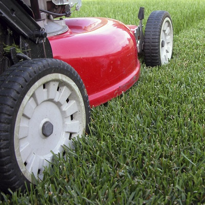 Renovate Your Lawn
