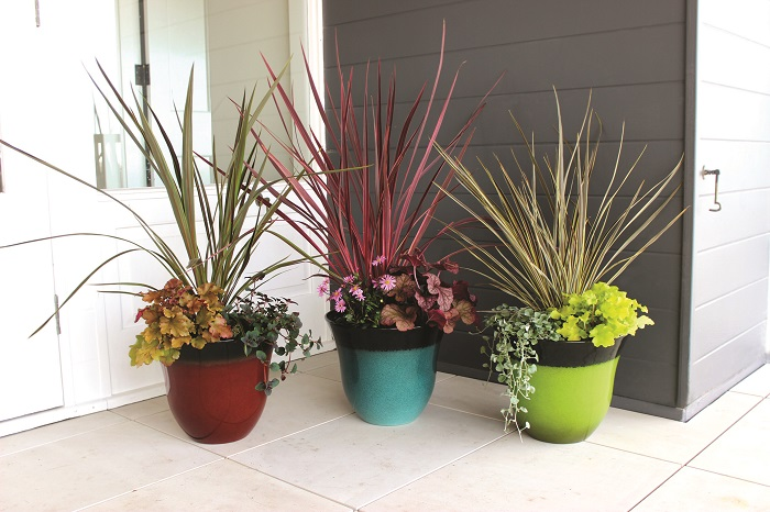 Austraflora Natives for NEW PrimoLITE Pots
