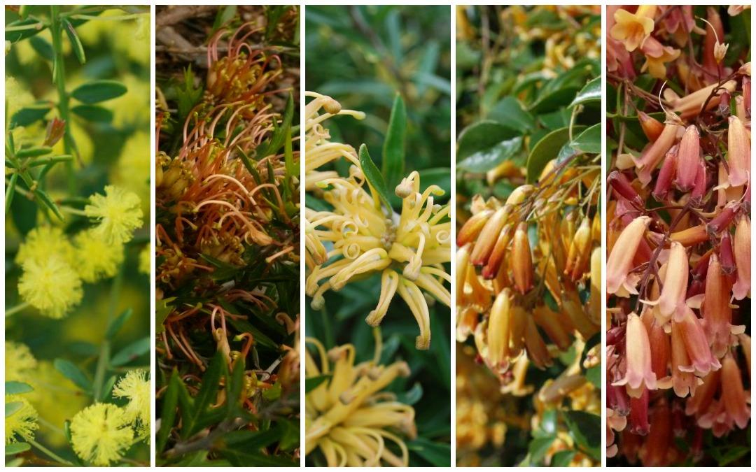 Glorious Golden Gardens
