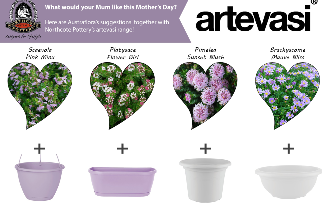 Mothers Day With Austraflora
