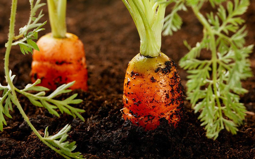 Refreshing Your Soil