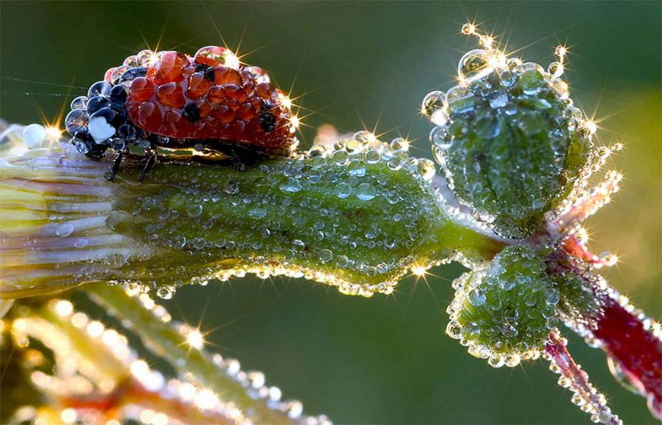 Ladybird, Ladybird Fly Away Home!